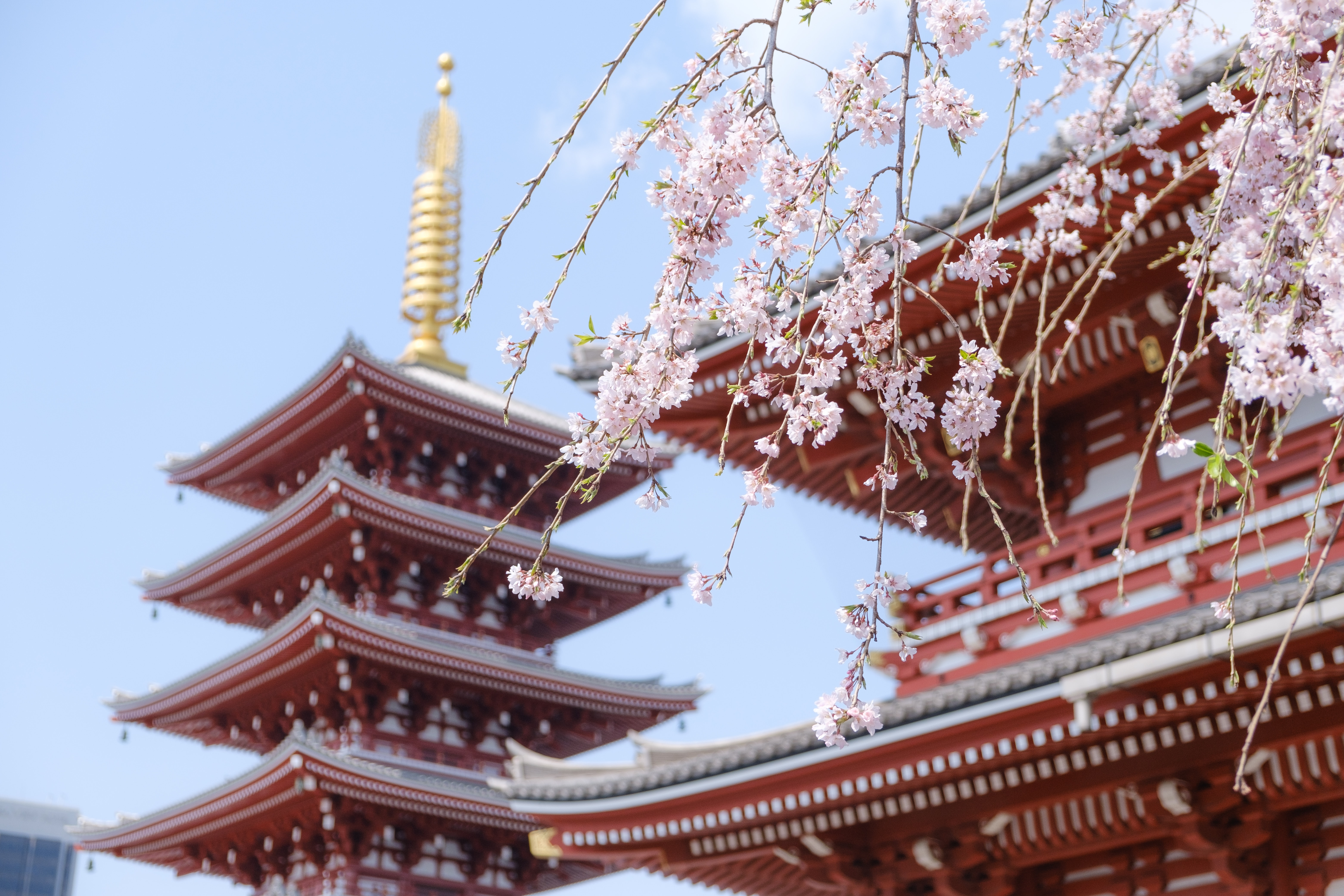 Toshogu Shrine - Attraction in Tokyo to visit in Ueno Park