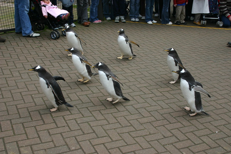 Penguin Parade - Visit Edinburgh Zoo