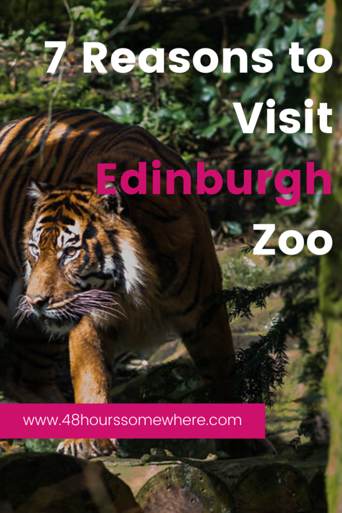 With all the museums, castles, parks and the festival fringe you can sometimes forget that Edinburgh also has the amazing Edinburgh Zoo.  When you next visit Edinburgh for a long weekend make sure as part of your itinerary you visit Edinburgh Zoo.